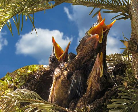 birdbabies-Prayer for All Beings-OWM-lightomega.org-VIL-Prayer-for-All-Beings.html.jpg