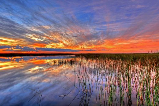 Sunset over everglades national park-artist-G Gardner-goparks.tumblr.com-post-113433440776-a-sunset-blazing-over-everglades-national-park-in.jpg