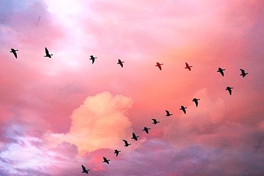 SKY-Birds-flickr-alicepopkorn-4100873011.jpg