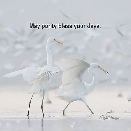 May purity bless-525x525-lightomega.org-posters-Light-Omega-Posters-3.html.jpg